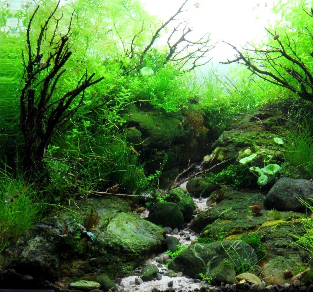 Thym thym thym l xx aquarium pinterest cube