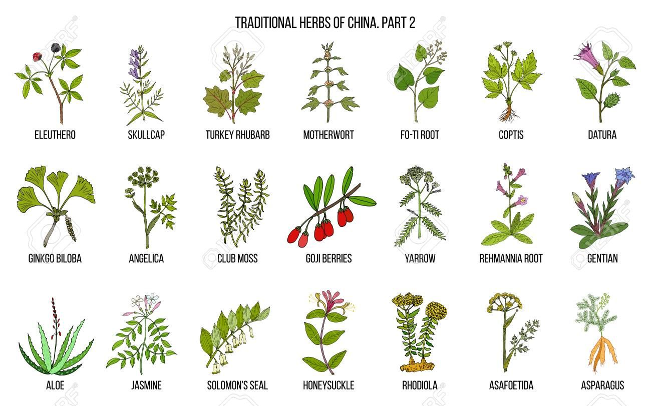 image result for club moss chinese herb [ 1300 x 812 Pixel ]