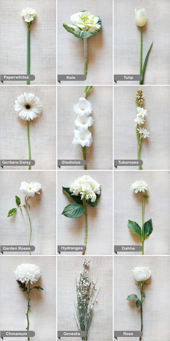 White flower guide pinterest white wedding flowers flower and white wedding flower guide learn the names of some beautiful flowers so you can ask for exactly what you want when you talk to your florist mightylinksfo