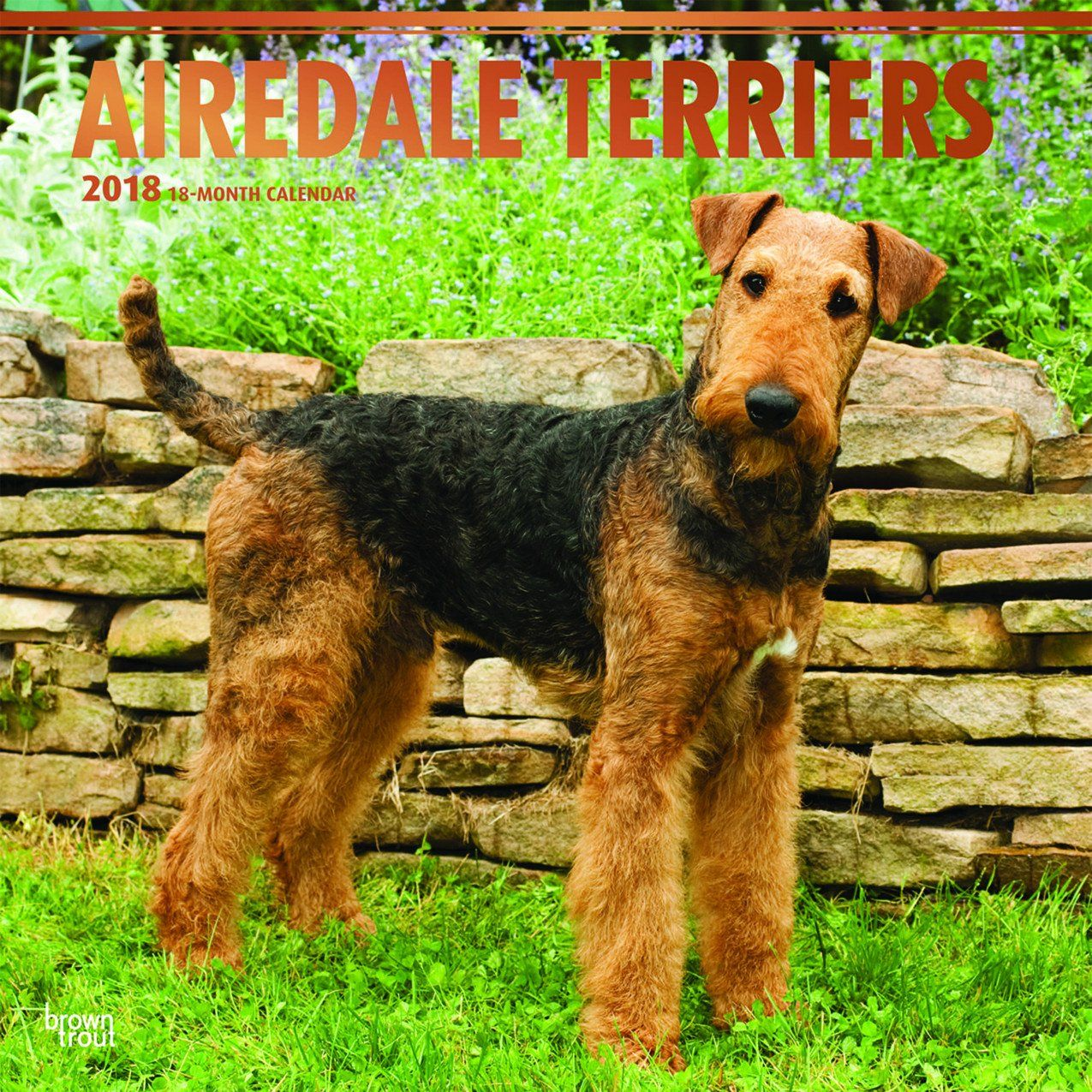 Airedale Terriers 2018 Wall Calendar Airedale Terrier Dog Breeds Large Dog Breeds