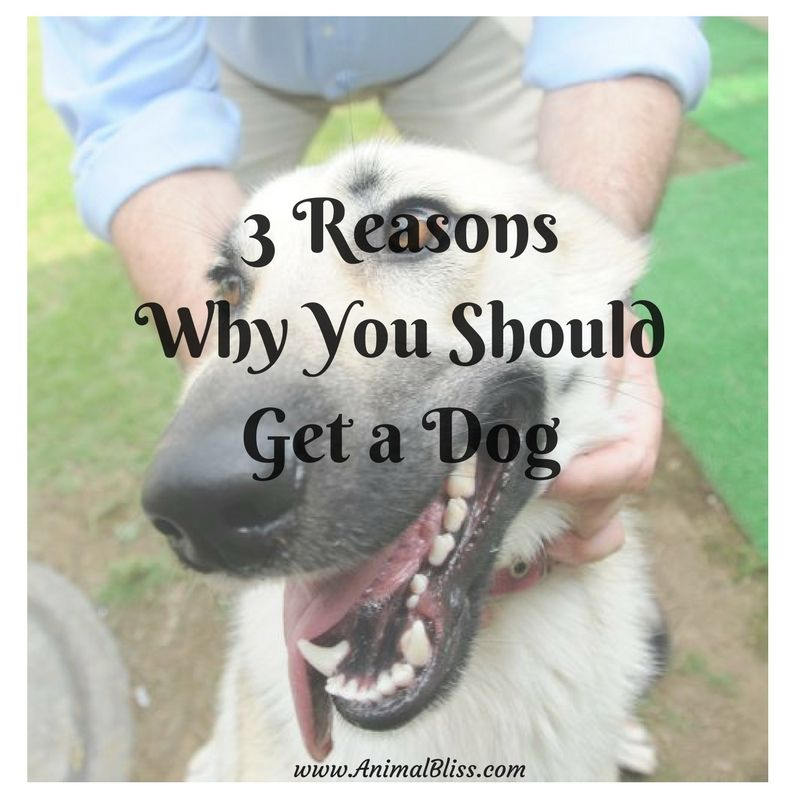 3 Reasons Why You Should Get A Dog Buy A Dog Dog Care Animal Books