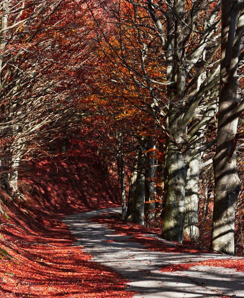Il bosco di rosso vestito