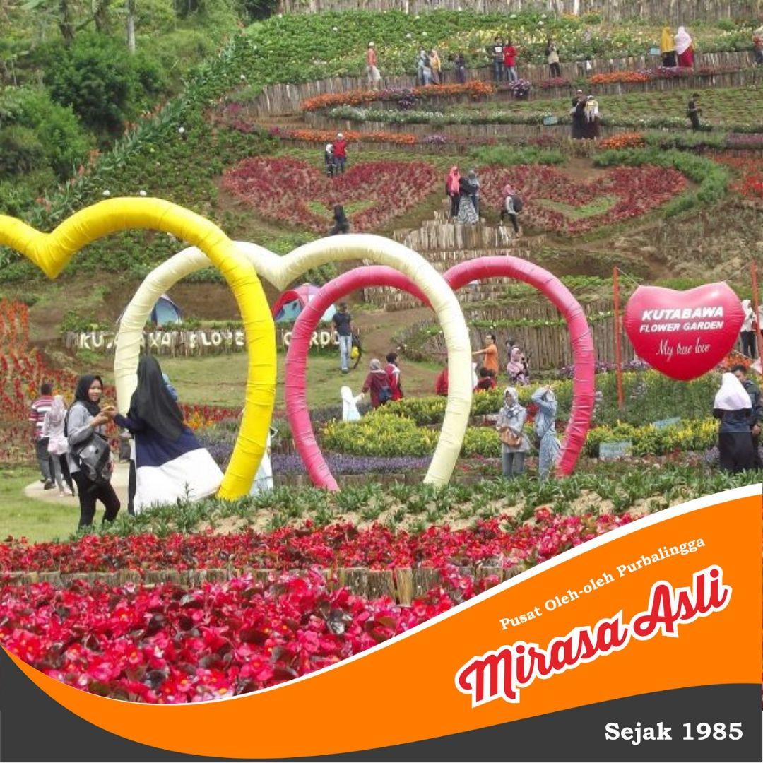 Wisata Purbalingga Jawa Tengah Taman Bunga Kutabawa