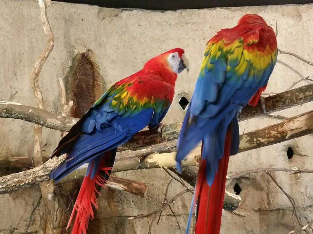 Birds of a feather @ #blankparkzoo