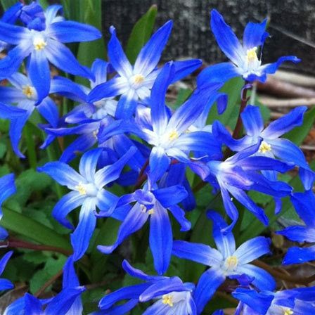 Trust Faith Wisdom And Confidence It Hences One Of The Sweetest Gestures That Can Make Here Are Some Prettiest Blue Flowers Ever