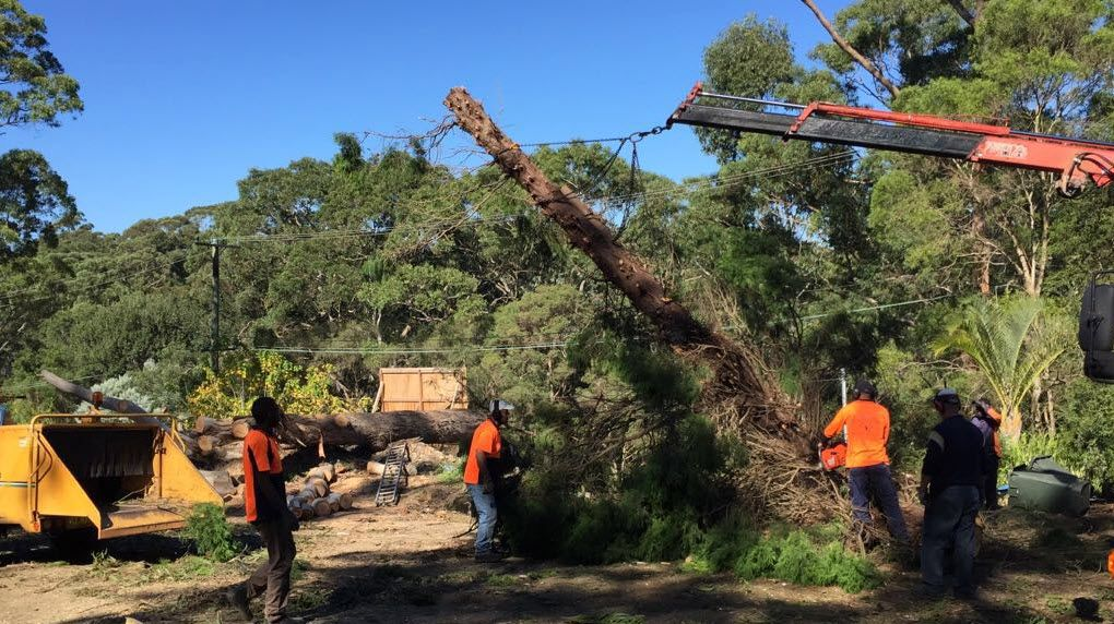 North Shore Tree Loppers are available 24/7 for emergency