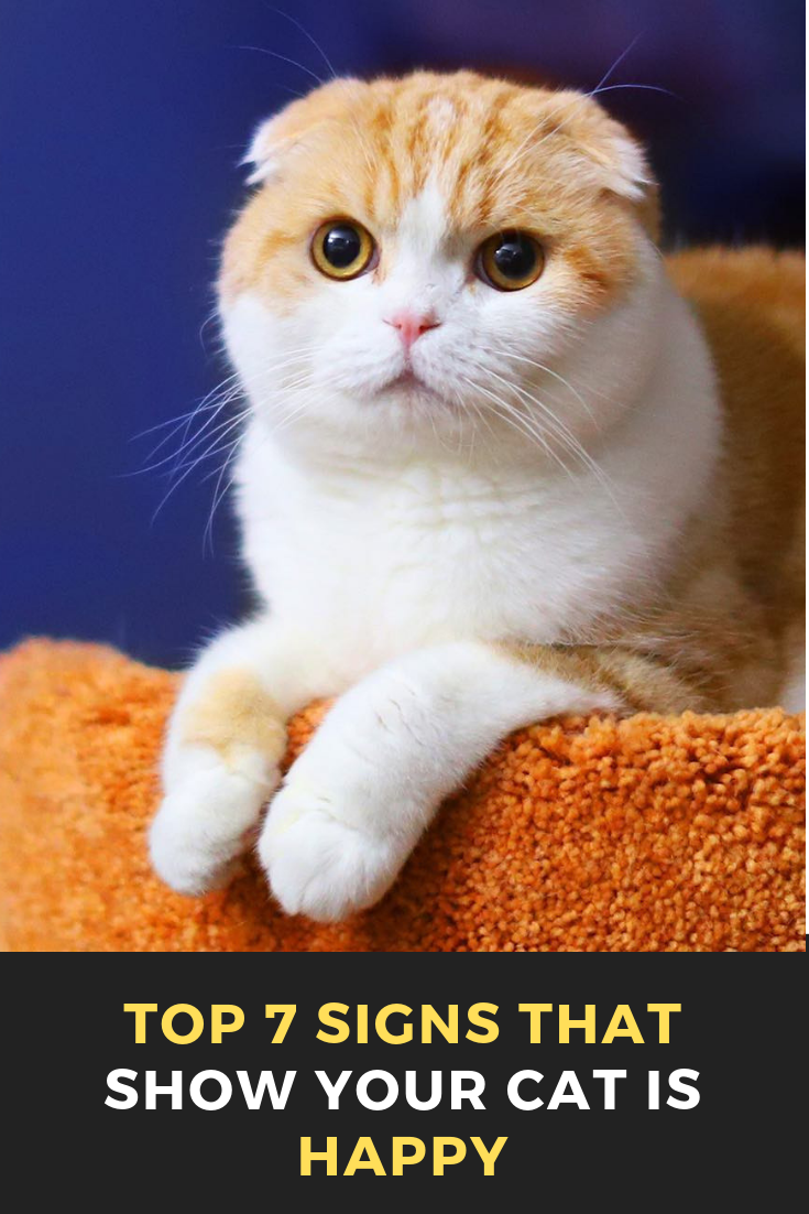 Top 7 Signs That Show Your Cat Is Happy Cats, Beautiful