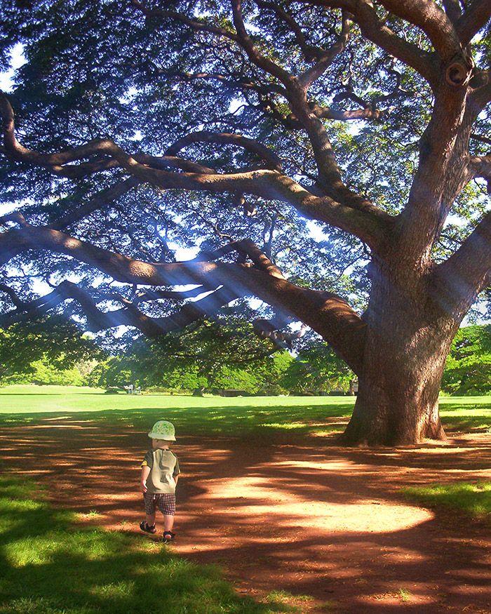 Moanalua Gardens One of Hawaii's best kept secrets
