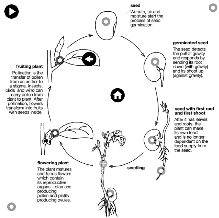 Pin By Pratya Inpramoon On The Part Of Flower Plant Life Cycle Plant Life Life Cycles