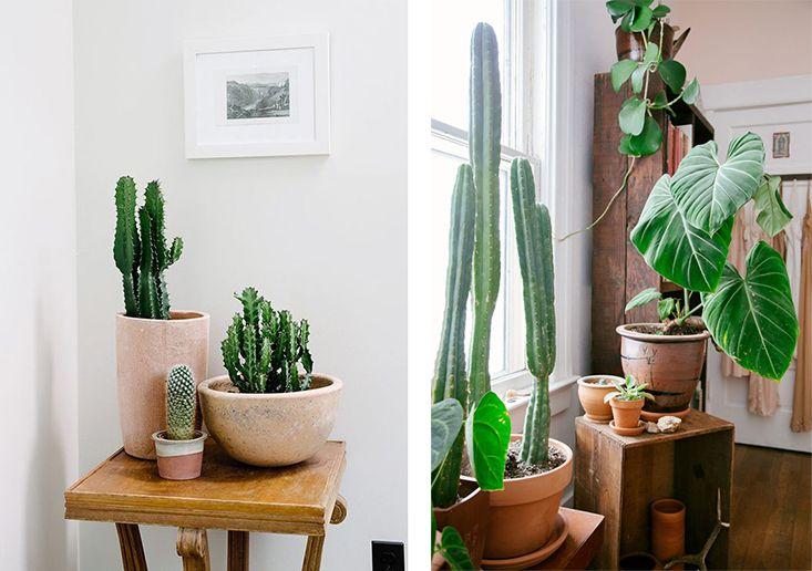 inspiration interior jungle id es appart nantes pinterest. Black Bedroom Furniture Sets. Home Design Ideas