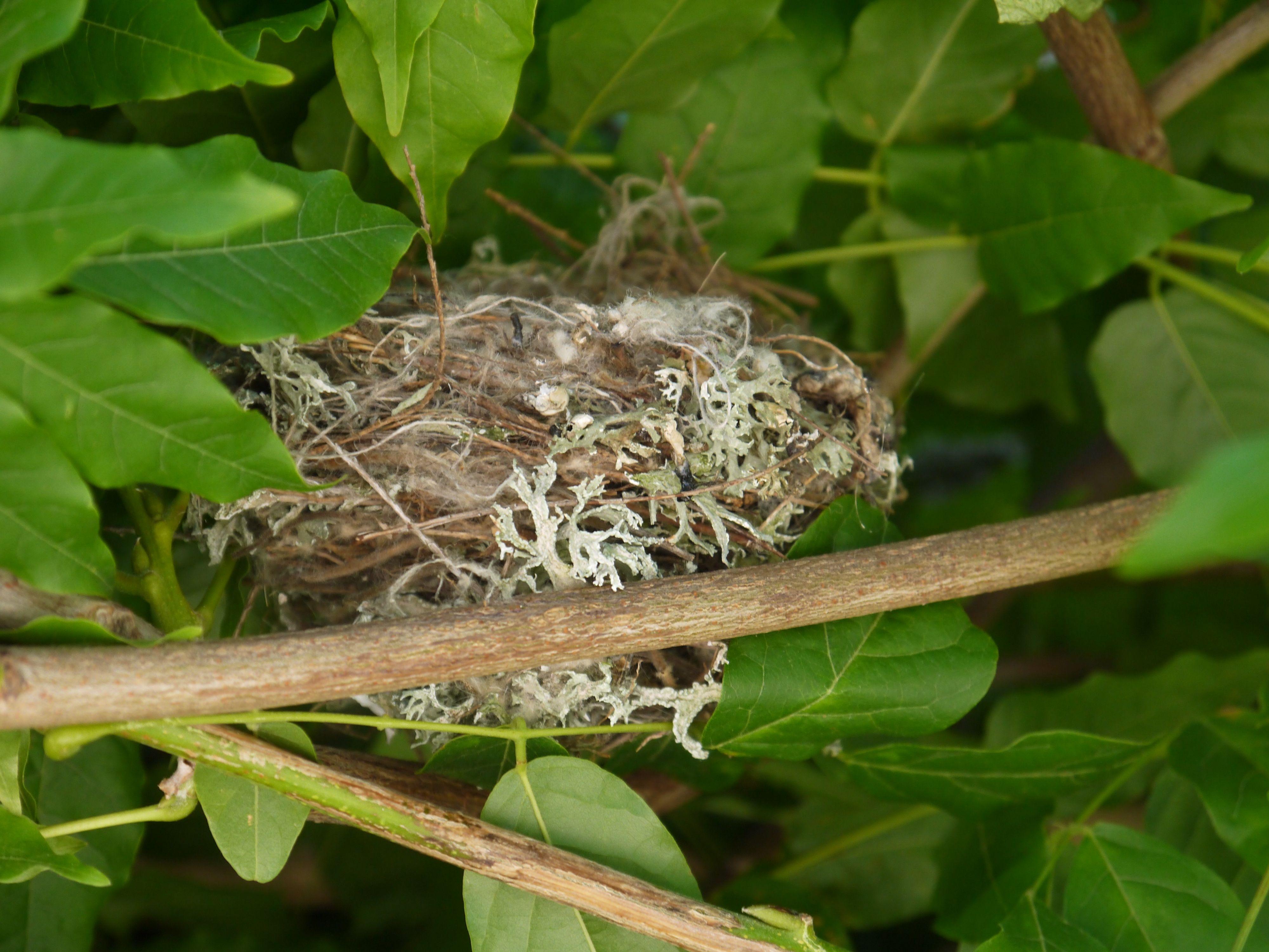 Leeg nestje in de blauwe regen