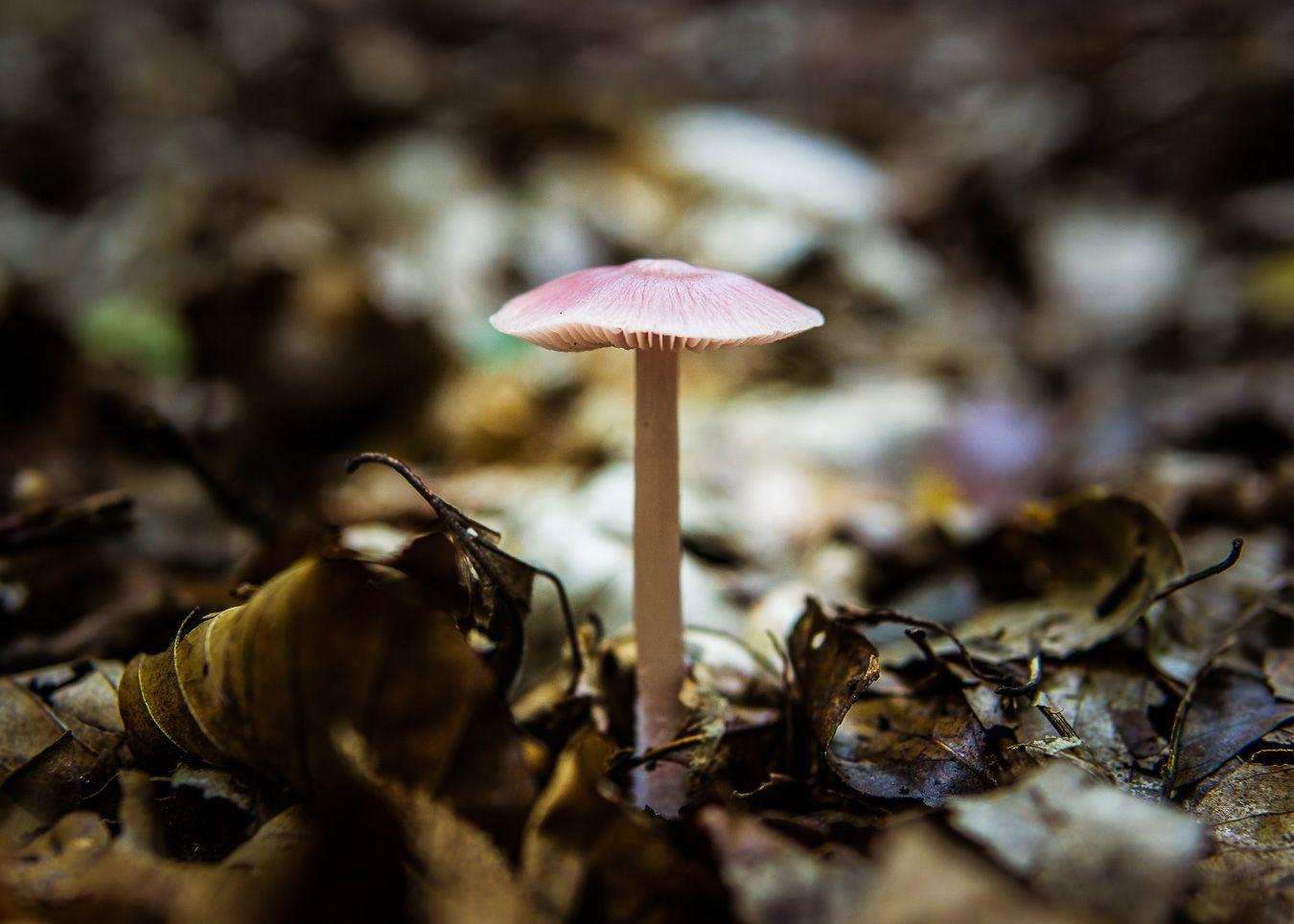 Pilze #pilze #sonya6000 #mushrooms #sigma30mm
