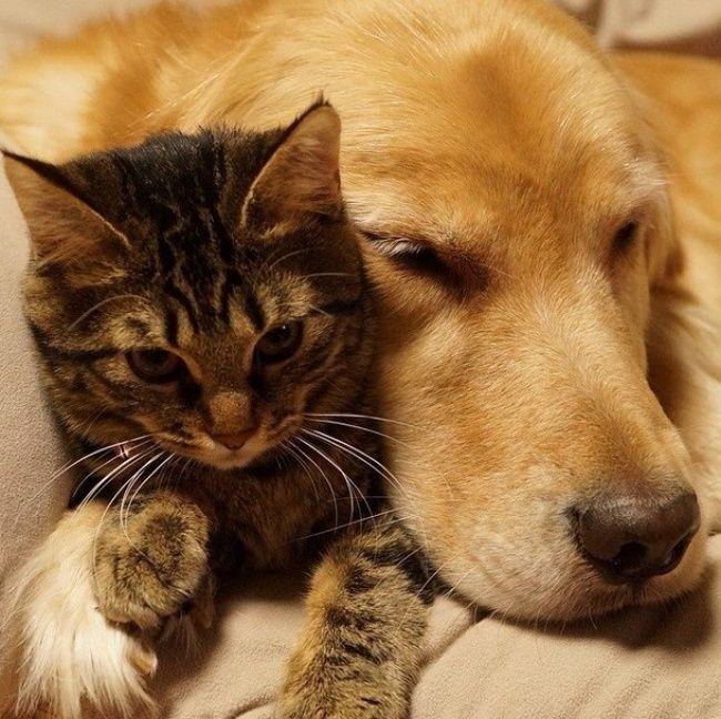 коты и собаки вместе фото владивостоке