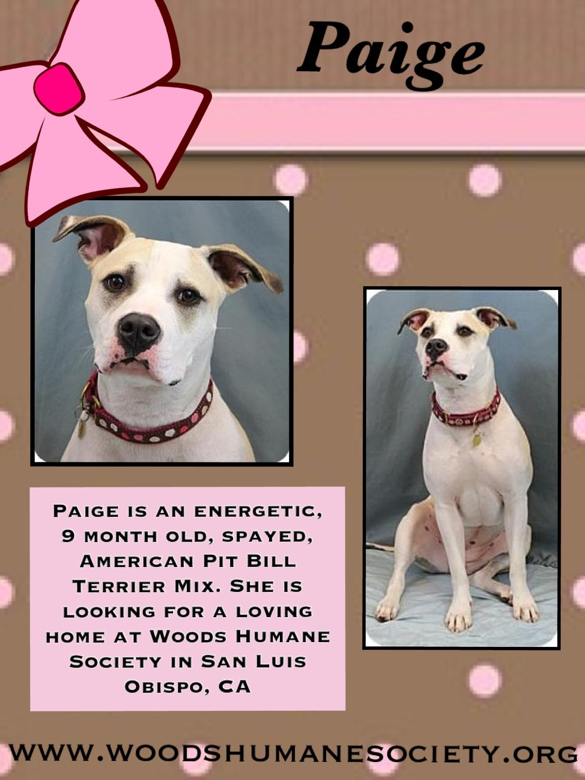 Paige Is Available For Adoption At Woods Humane Society In San