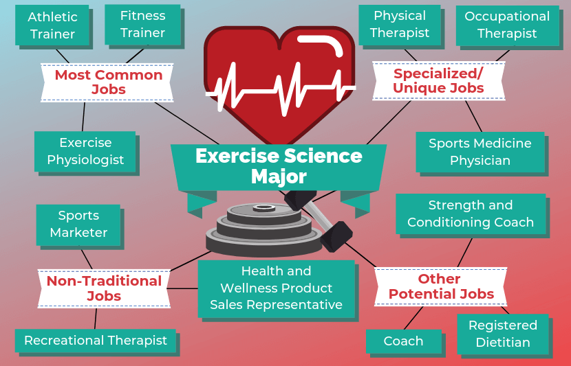 12 Jobs For Exercise Science Majors Doctor of physical