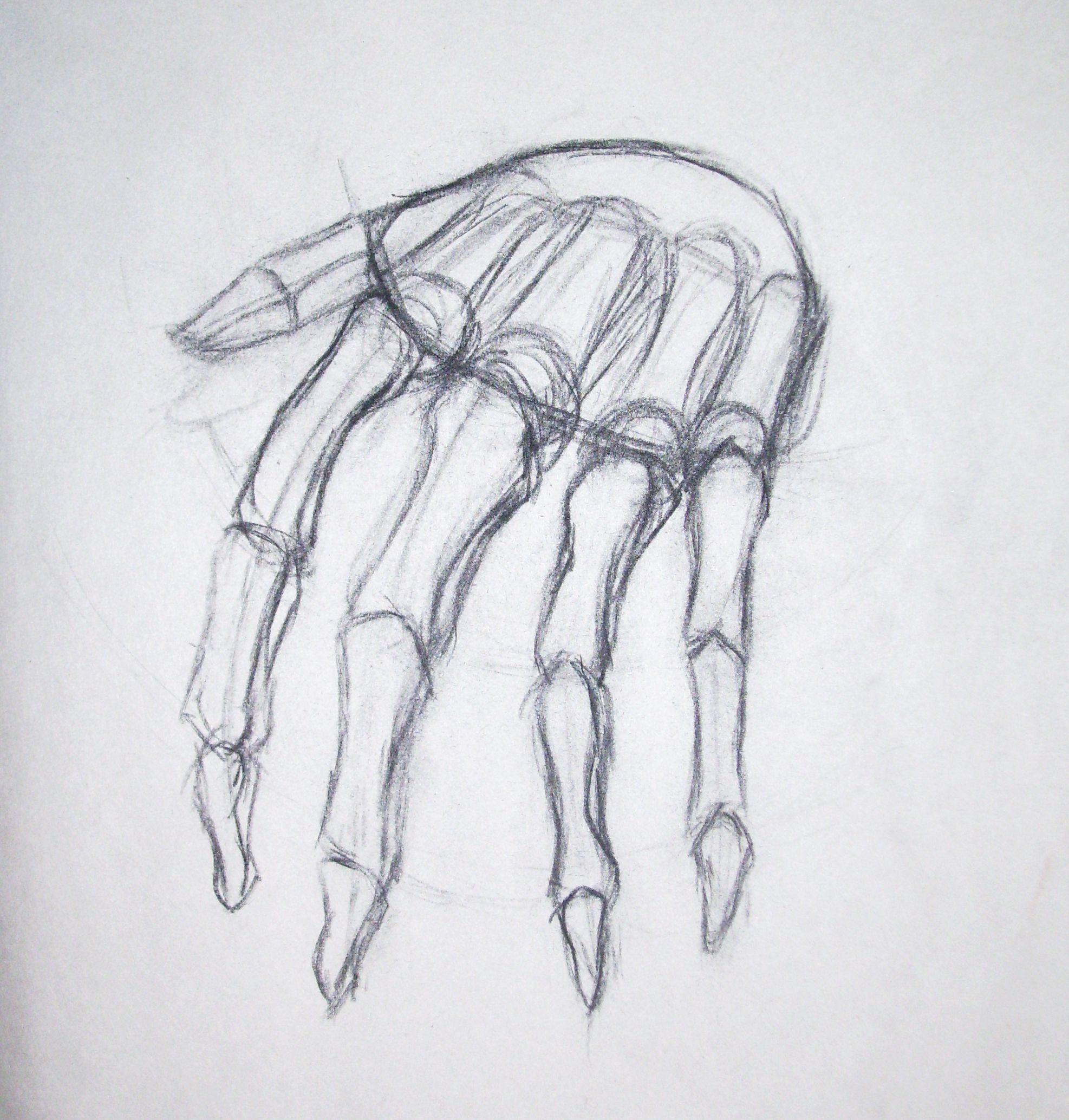 Week 11 Skeleton hands drawing, Skeleton drawings, How