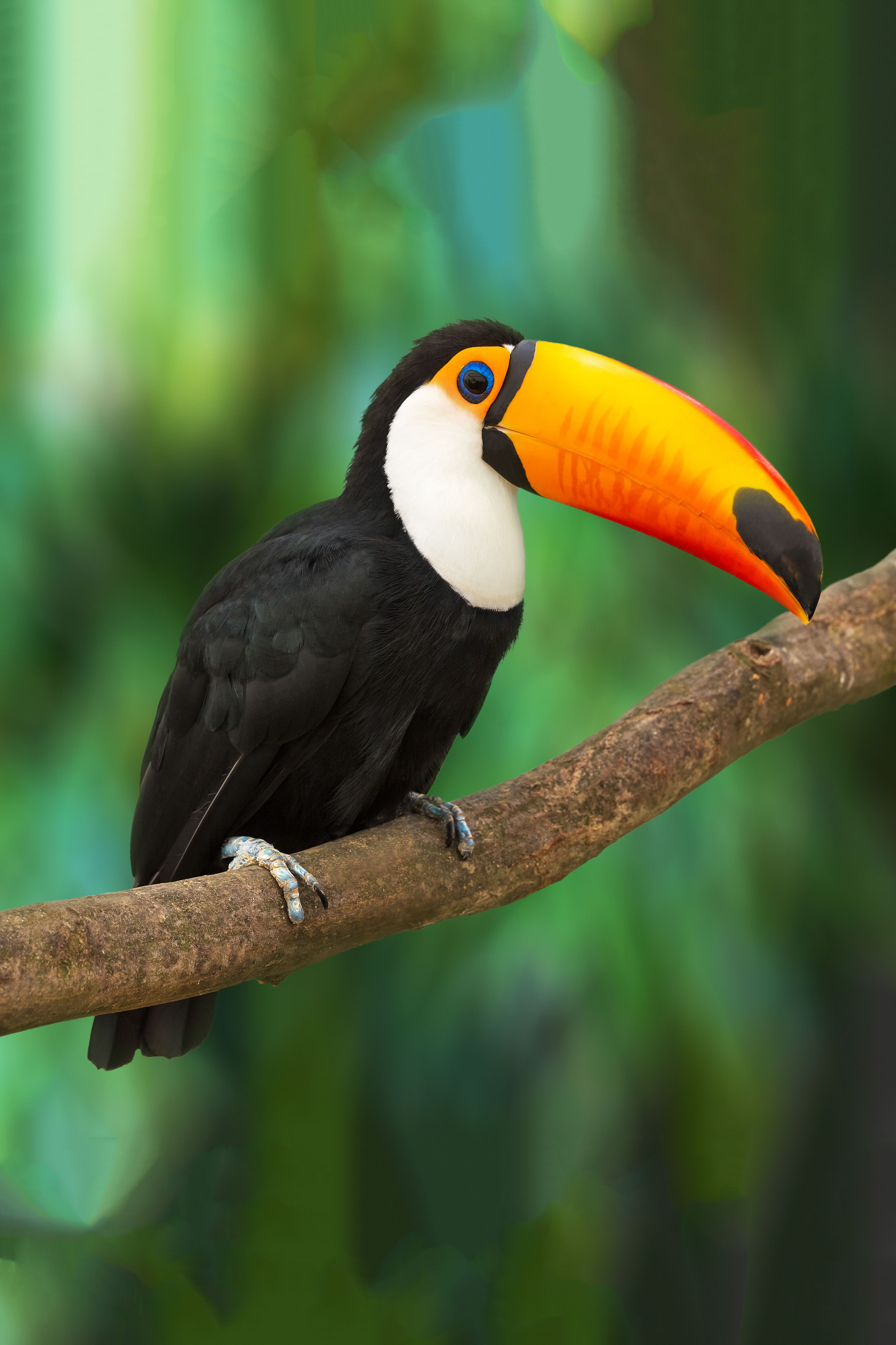 South American Travel Specialists Rainforest animals