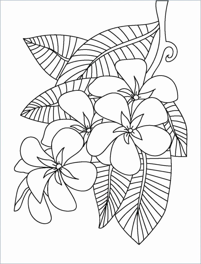 Online Drawing Book Beautiful Tumblr Aesthetic Drawing 200 Awesome Pastel Aesthetic Coloring Pages Inspirational Flower Coloring Pages Coloring Pages