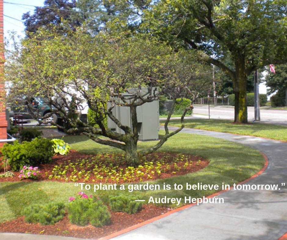 WednesdayWisdom Garden plants, Wednesday wisdom, Plants