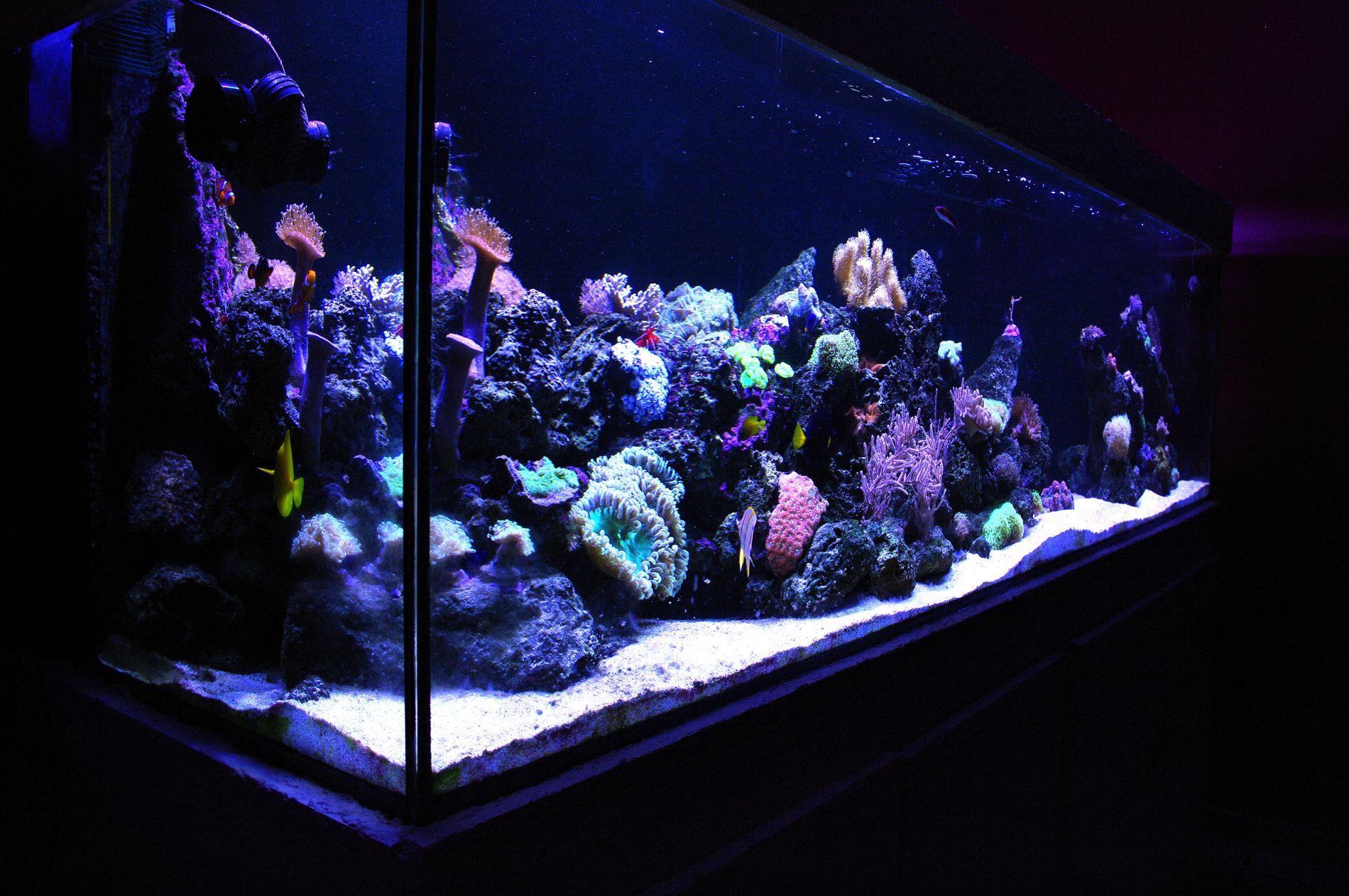 f1fb0d648bbe2c0fa369ce364e3a8ca3 Frais De Aquarium Avec Meuble Schème