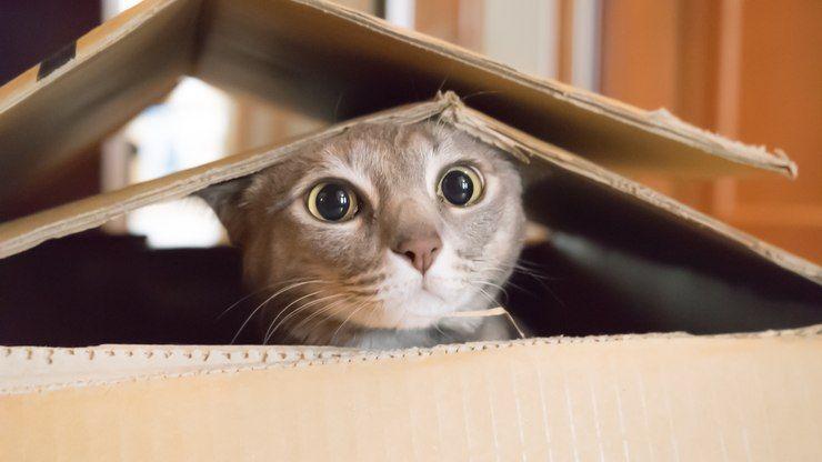 Mudanca De Casa Pode Representar Um Perigo Para A Saude Dos Gatos