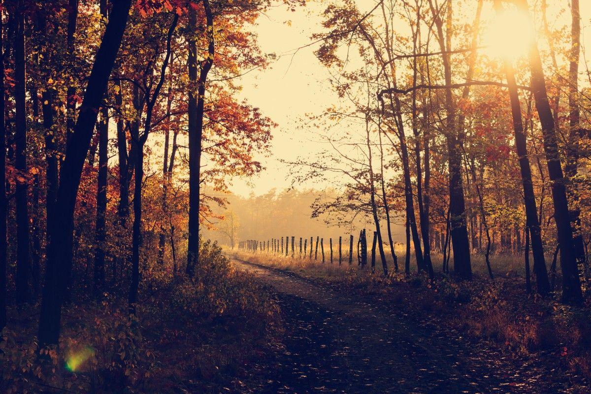 Gratis Billeder Trae Natur Skov Sti Afdeling Solopgang Solnedgang Tage Sollys Morgen Blad Efterar Daggry Ga Aften Fall Pictures Background Photo