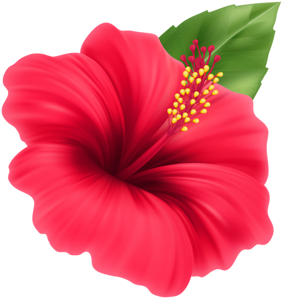 Hibiscus Red Flower Png Clipart In 2020 Red Flowers Flowers Clip Art