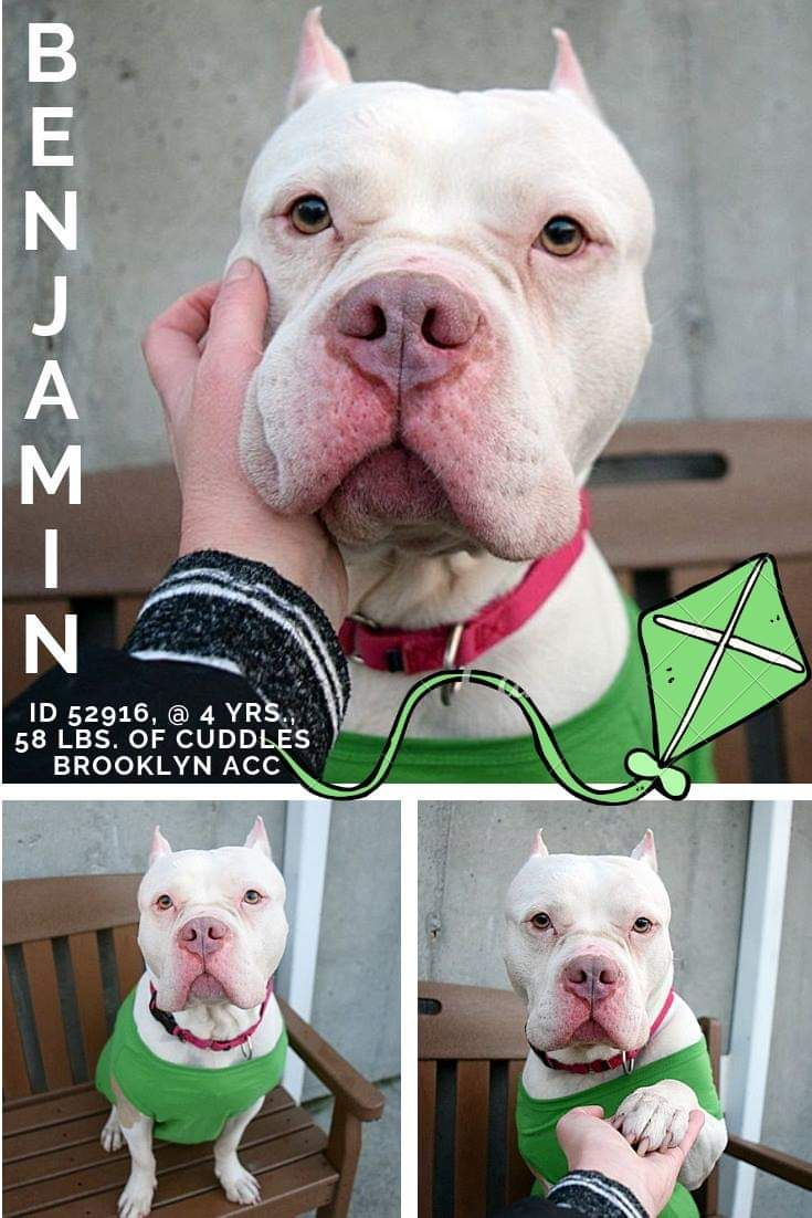 Ann gaviota330 on twitter shelter cats adoption dog