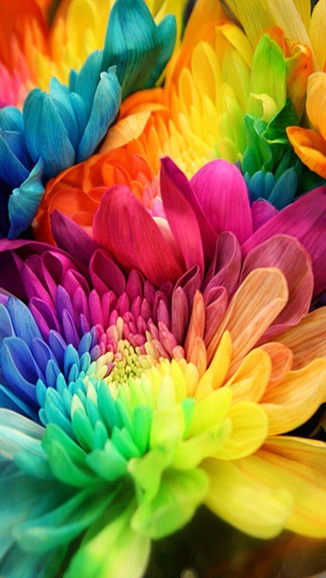 So Pretty Rainbow Flowers Colorful Flowers