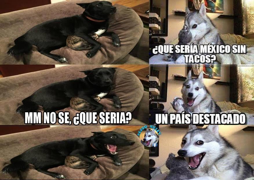 Recopilacion De Memes Del Perro Husky Funny Memes Husky Memes Funny Husky Meme