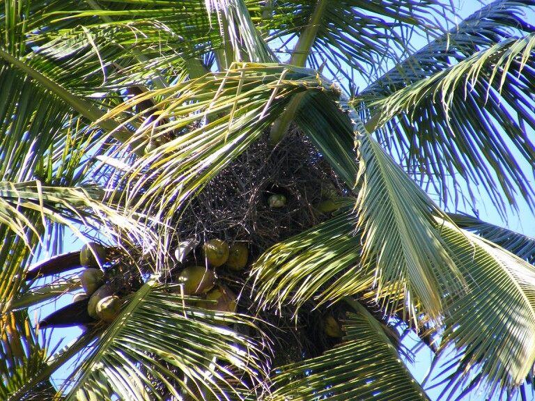 Parrot in her nest. Punta Salina