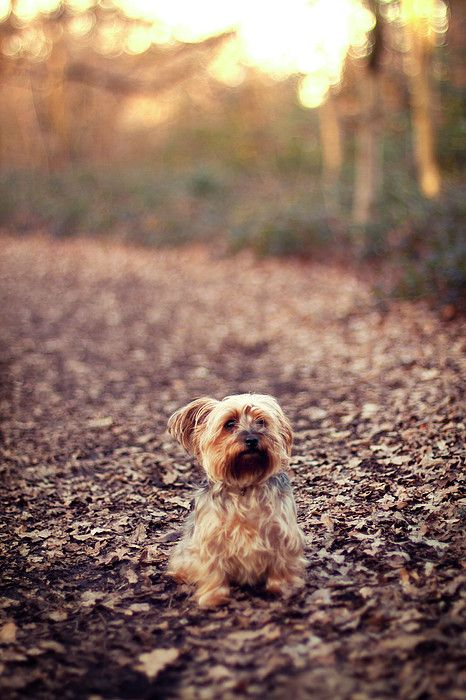Long Hair Puppy By Someone Bought My Images Cute Animals