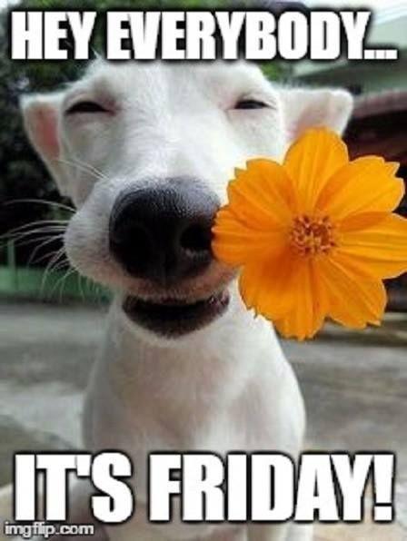 18 Good Morning Memes Friday - Using Memes