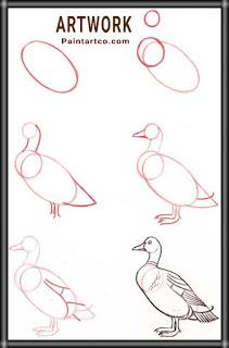 تعليم الرسم للاطفال بالخطوات صور رسم بطة للاطفال بالرصاص سهلة وبسيطة خطوة بخطوة بالصور Drawing Tutorial Bird Drawings Creature Drawings