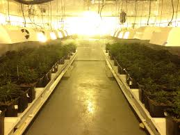 Layout Commercial Grow Room Design Plans Google Search ในป 2020