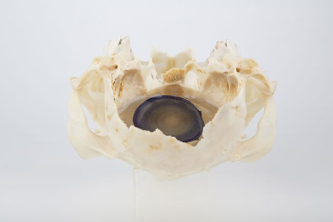 A familiar intersection, art and science. Marion Catusse experiments and uses a number of interesting materials and subjects in her pieces. Minerals, stones, and bones combine with resin, inks, and...