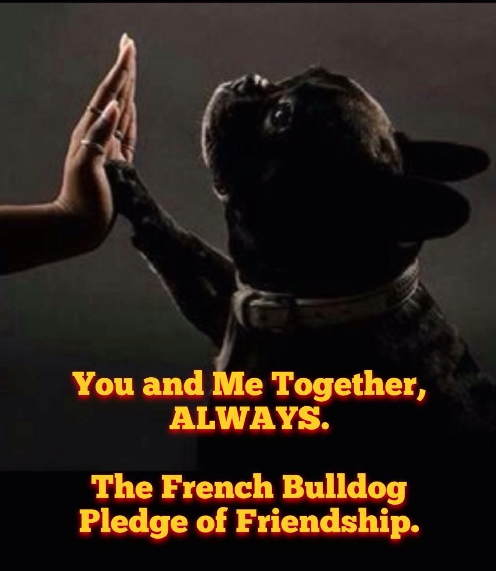 Bulldog Quotes Pinerin On Quotes  Pinterest  French Bulldogs Dog And Animal