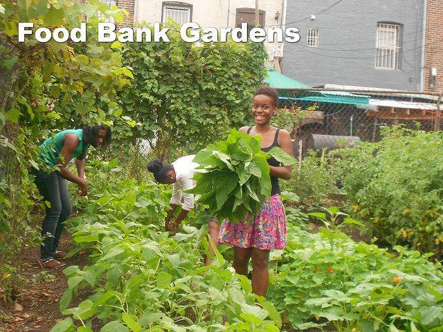 The SeedMoney Garden Grants Program   Kitchen Gardeners ...