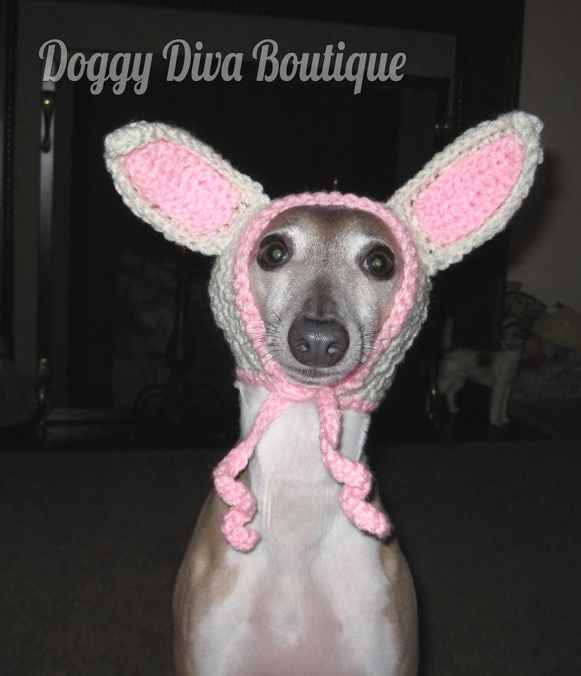 Sweaters for greyhounds doggy diva boutique italian greyhound sweaters for greyhounds doggy diva boutique italian greyhound hat funny cute bankloansurffo Images