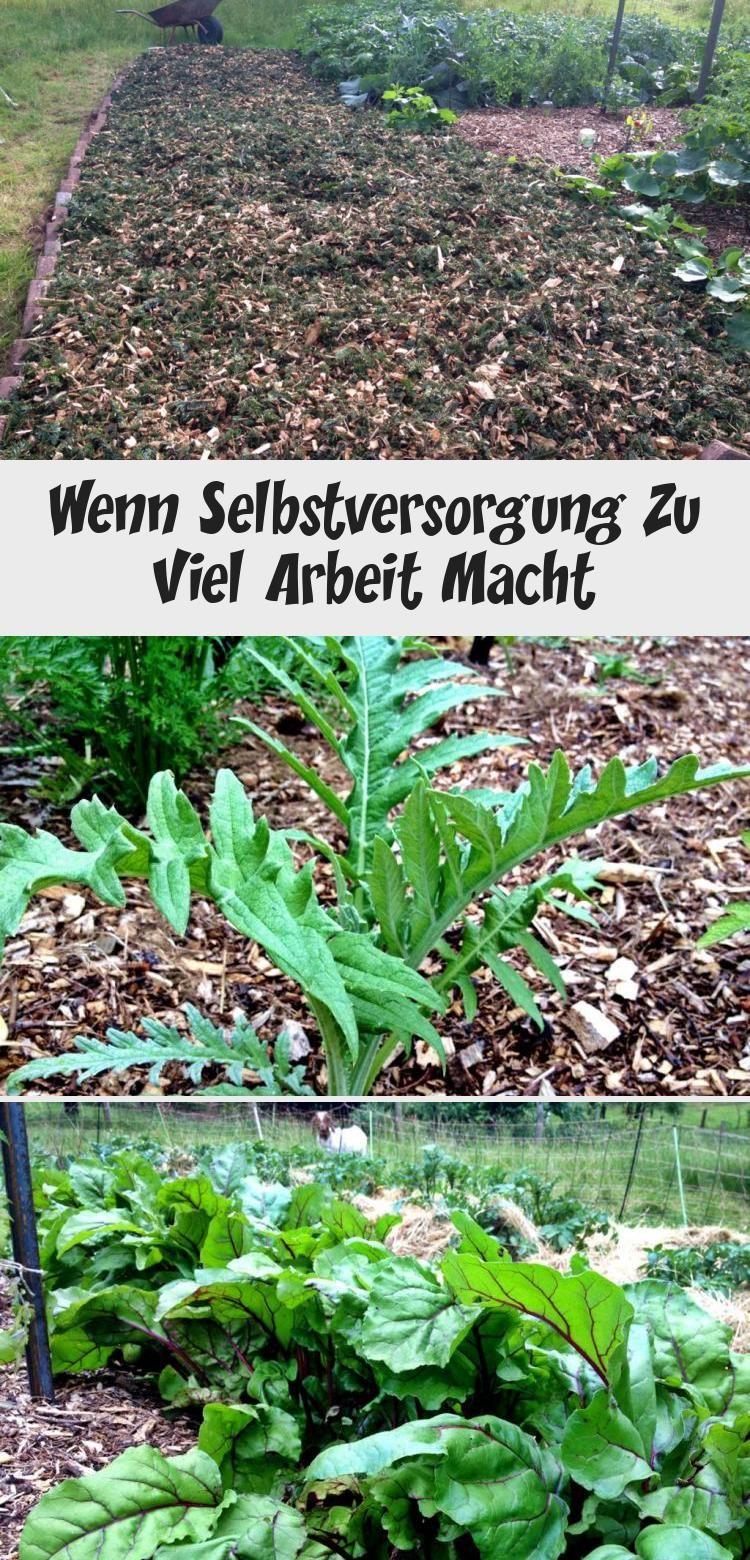 Eine Ehrliche Abrechnung Mit Dem Leben Als Selbstversorger Selbstversorger Selbstversorgung Garten Gartenplanunghang Gartenplanungideen Gartenplanun Plants