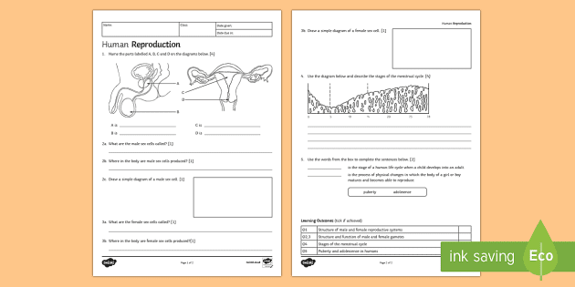 ks3 human reproduction homework activity sheet - homework, Skeleton