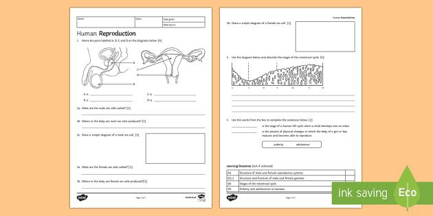 ks3 human reproduction homework activity sheet - homework, Skeleton
