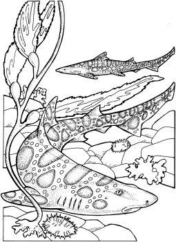 Ocean Leopard Shark Shark Coloring Pages Leopard Shark Animal Coloring Pages