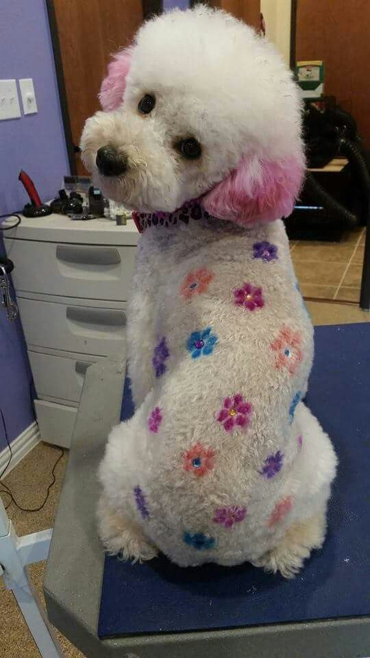 Flower Poodle With Images Pet Resort Creative Grooming