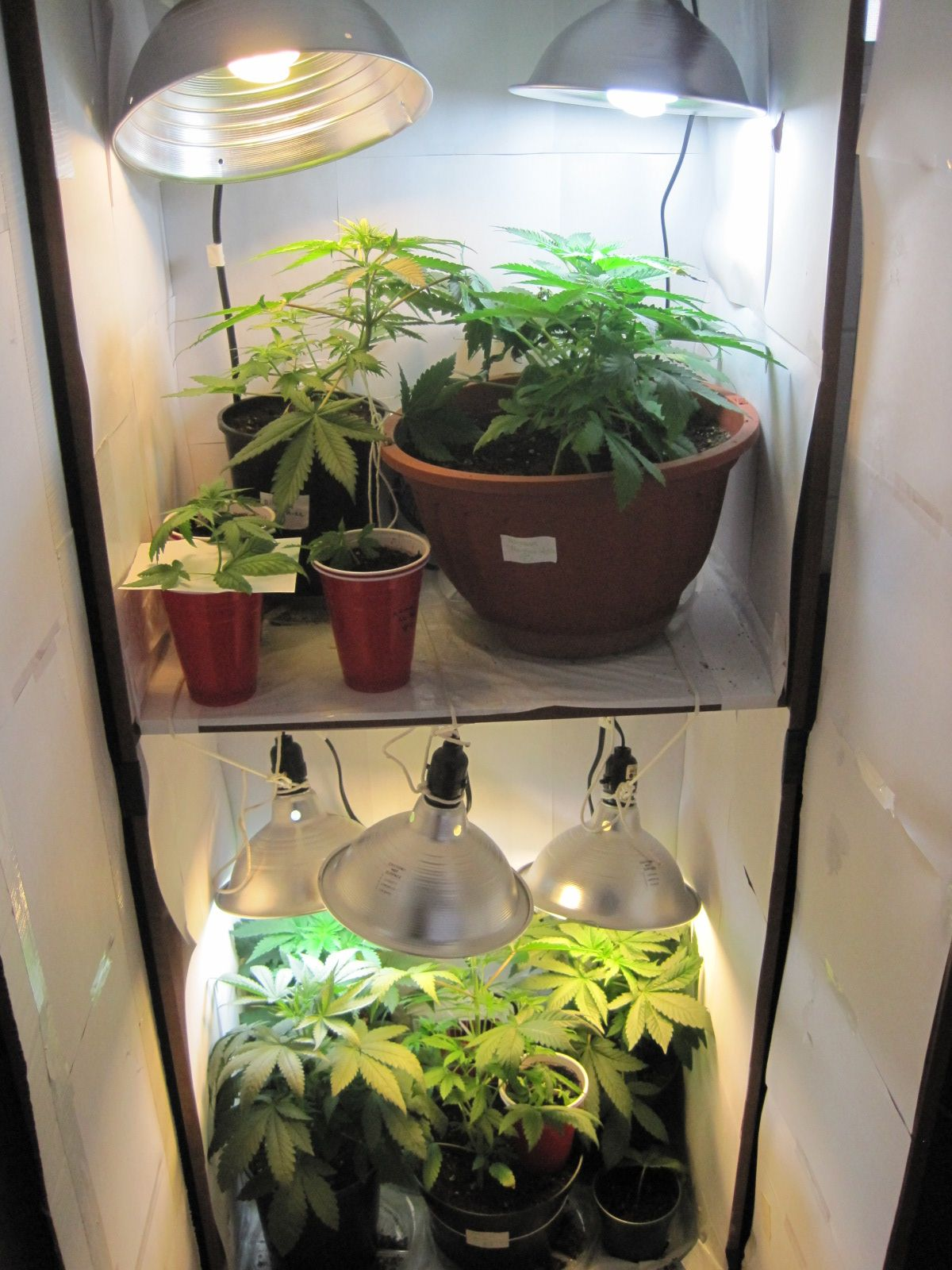 Growing A Garden Indoors If you want to discover more about indoor growing double click now if you want to discover more about indoor growing double click now workwithnaturefo