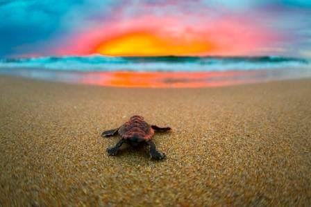 Pin by Susan Rucker on Beautiful | Sea turtle wallpaper