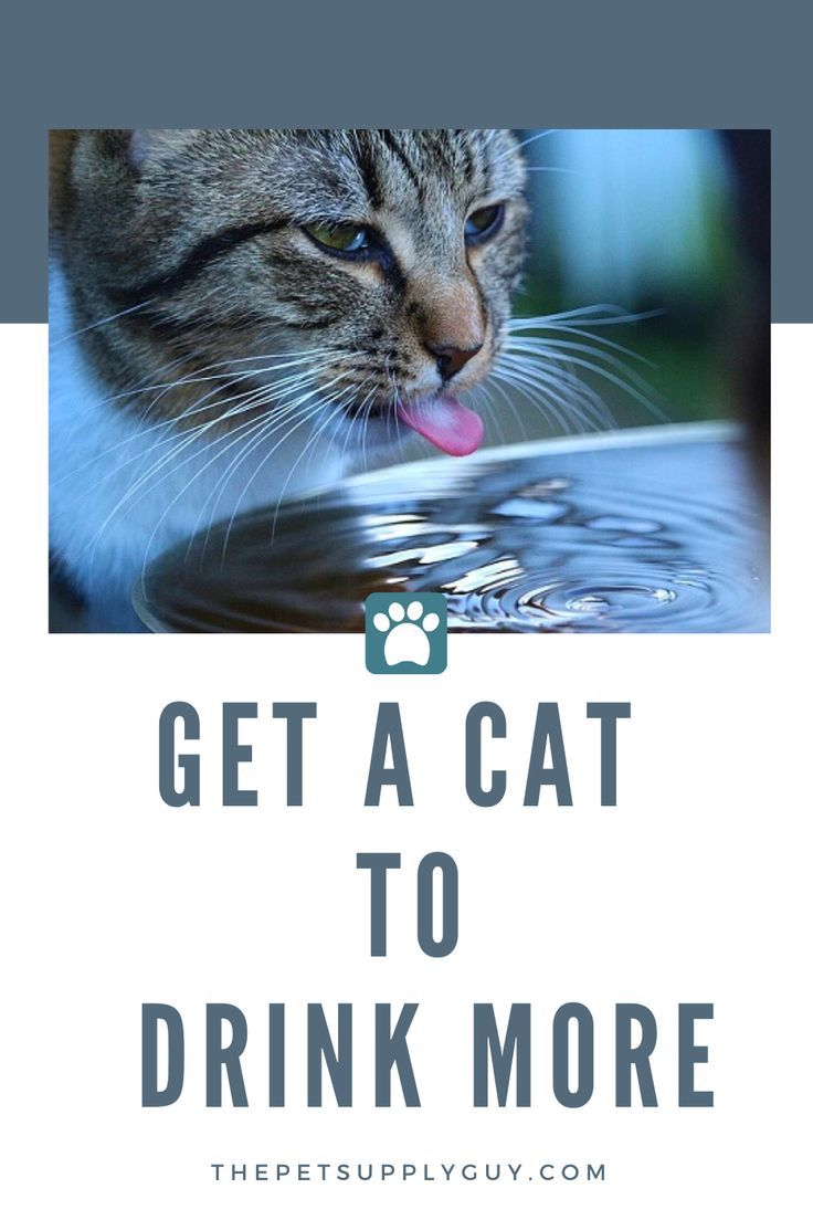 How to get my cat to drink more water pregnant cat cats