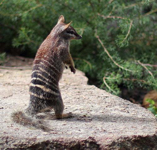 10 Awesome Animals Whose Names Start With The Letter N Animals Weird Animals Numbat