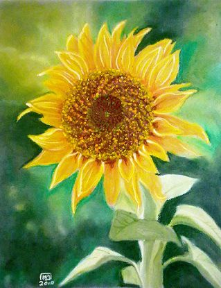 A Sunflower Oil Pastel Painting Oil Pastel Paintings Oil Pastel Art Pastel Art