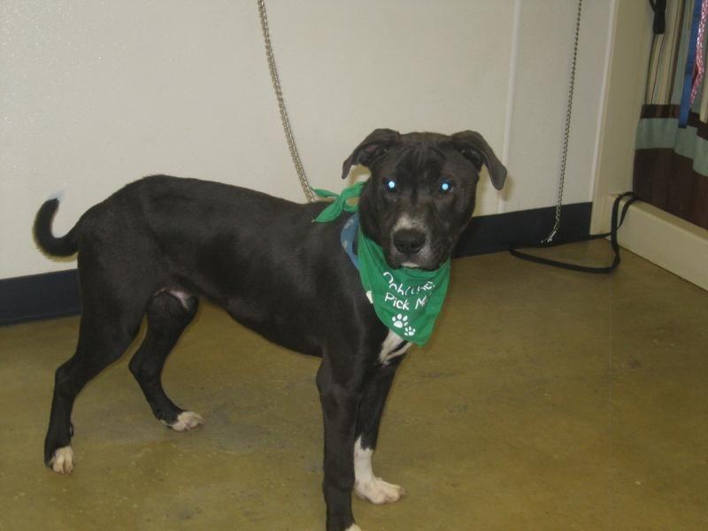 Adopt the count urgent on pet adoption animal